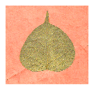 Gold Bodhi Leaf Card